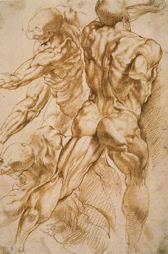 Cave to Canvas, Peter Paul Rubens, Anatomical Studies, 1606-08