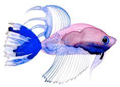 Margaret Berg Art: Watercolor Fish: Purple