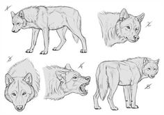 Premades YCH and Templates for sale by makangeni on DeviantArt Animal Sketches, Animal Drawings, Art Sketches, Art Drawings, Wolf Drawings, Wolf Poses, Wolf Sketch, Werewolf Art, Anime Wolf