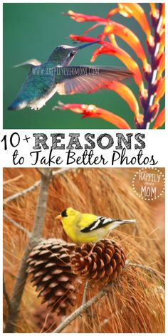 Sometimes I think about why I should learn to take better photos when my camera can just do it for me!!  Especially since I don't want to be a professional photographer...but, #3 and #5 really stood out to me a...