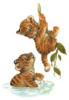 Zoo, Jungla, Selva Animales Imagenes | párr Bajar
