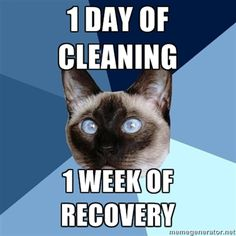 """[Image: 6-piece blue colored background with a Siamese cat.Text reads: """"1 day of cleaning. 1 week of recovery""""]"""