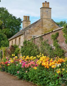 Dahlia border on the Culzean Castle grounds, Ayrshire, Scotland English Garden Design, Home And Garden Store, Dahlia Flower, Dream Garden, Garden Planning, Garden Inspiration, Beautiful Gardens, Garden Landscaping, Landscape Design