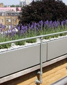 Lavender planters on roof terrace