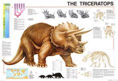 Tricetarops