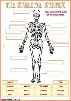 Skeletal System Activities, Skeletal System Worksheet, Human Body Activities, Science Worksheets, Kindergarten Worksheets, Worksheets For Kids, Printable Worksheets, Kindergarten Art, Human Body Systems
