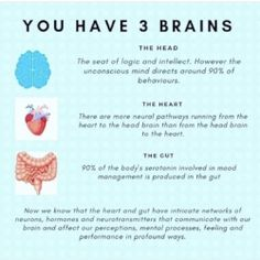 ✨ In Chinese Medicine, the head and the gut are referred to the upper and lower dan tians, or energy centers. Gut Brain, Brain And Heart, Head And Heart, Athlete Nutrition, Neurone, Soul Family, Heart Function, Neurotransmitters, Chinese Medicine