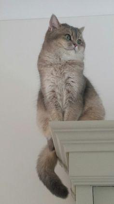 Het is haar gelukt hoor, Holly Rose zit boven op de kast. Daar heeft ze rust, want hoe graag ze ook zou willen, dat durft Willow Fae nog echt niet aan!