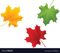Green Maple Leaf Isolated Stock Photo Picture And Royalty Free Leaves Vector, Green And Orange, Plant Leaves, Funny Pictures, Maple Leaves, Stock Photos, Wallpaper, Illustration, Plants