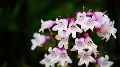 #flower #flowers #ig_flowers #superb_flowers #FlowerStalking #wp_flower #floral_splash #igscflowers