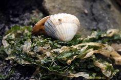 Nochmal am Meer Green Ocean, Mermaid Tale, Out To Sea, Am Meer, Treasure Island, Sea Shells, Seaside, Small Things, Pirates