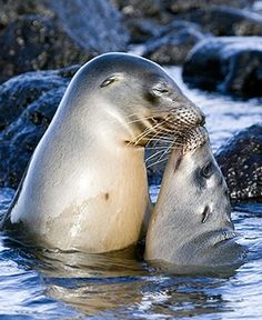 Baby Animals And Their Mothers | ... love present between baby animals and their mothers have a look