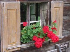 Az osztrák parasztház ablakában muskátlik nyílnak. Windowbox filled with flowers in an old rustic house in Austria.