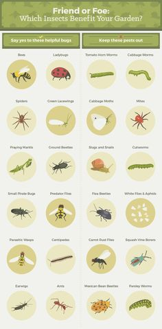 Friend or Foe: Which insects benefit your garden?