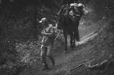 Overland Collective member @grayoutdoors leading his horse through the trees in Montana.  PC: Overland Collective member @jax.berger #Montana #photographer #horse #horses #horseback #riding #leading #hiking #forest #wilderness #outside #adventurelife #travel #goplay #packinpackout #packanimal
