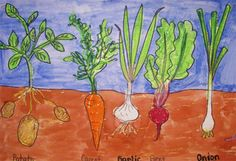 Students were able to look at some real vegetables that had been pulled from the ground. We discussed the difference between a vegetable garden and a flower garden. Students noticed that even though sometimes vegetables are grown below the ground you can still tell what it is by looking at the leaves. They used this knowledge when they created their vegetable garden paintings. They started with pencil and sharpie, then colored the veggies with oil pastels, then painting the remaining areas…