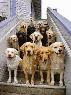 Best dogs around