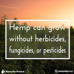 Hemp is a sustainable solution for thousands of products!