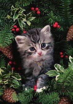 Christmas Kitty!!!