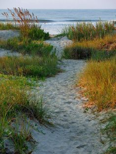 Lets meander to the Beach! This is so like Cape Cod...but I would take ANY beach...and an ocean beside it.