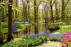 Keukenhof, Pays Bas