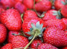 Videos - Homegrown / Homemade: Strawberries. Includes how to plant, maintain, harvest, preserve and make classic strawberry shortcake. Watch all the episodes here http://www.vegetablegardener.com/item/9413/homegrown-homemade-strawberries