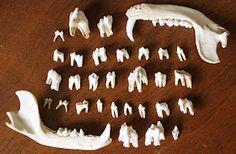 Teeth. #DeltaDental