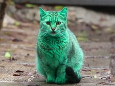 What's the deal with this green cat? | Inhabitat - Sustainable Design Innovation, Eco Architecture, Green Building