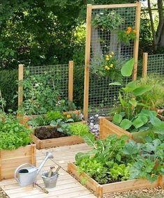 Small Vegetables Garden for Beginners_1 #gardeningforbeginners