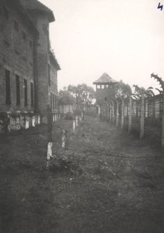 Auschwitz. Picture by Marek Księżarczyk, Auschwitz Study Group member.