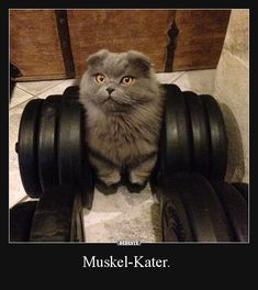 Muskel-Kater.
