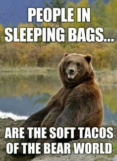 Does this mean bears observe #TacoTuesday, too?