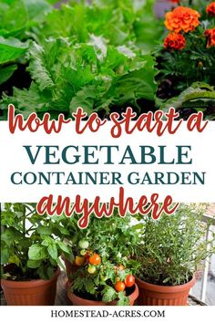 you want to start a balcony vegetable garden? Growing in containers has a lot. Do you want to start a balcony vegetable garden? Growing in containers has a lot. , Do you want to start a balcony vegetable garden? Growing in containers has a lot. Diy Gardening, Small Space Gardening, Garden Pests, Gardening For Beginners, Organic Gardening, Flower Gardening, Balcony Gardening, Balcony Plants, Gardening Gloves