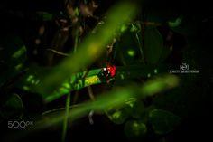 Ladybug - Follow me on:  Fb:facebbok.com/enea.mds Twitter twitter.com/EneaHany Instagram: eneah.px Google+:plus.google.com/u/0/+EneaMedas