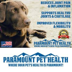 CONCENTRATED All Natural Hip and Joint Supplement For Dogs  PREMIUM Liquid Glucosamine For Large Dogs Chondroitin MSM and Hyaluronic Acid  Large Dog Glucosamine -- Click on the image for additional details. (This is an affiliate link) #DogFenceDoorsGates