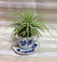 Tilla Critters Tea Time One of a Kind Air Plant Creations from Chili Fiesta HandiWorks