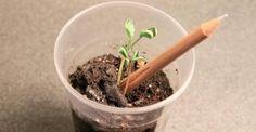 Sprout: piantala con la matita! Un seme nella mina per riutilizzarle