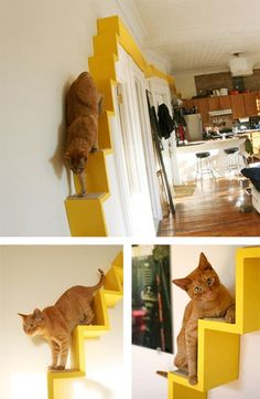 Trendy Cats And Kittens Diy Apartment Therapy Ideas Cat Apartment, Apartment Therapy, Apartment Hacks, Cat Hacks, Cat Perch, Cat Shelves, Cat Playground, Cat Care Tips, Cat Room