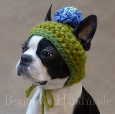 Studying Animals: Knitted Hats and Sweaters for Cats and Dogs