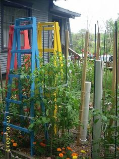 Tomato cages or tomato ladders? Here's how to work with either.
