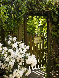 GATE A white Rhododendron, 'Chinoides White,' billows across the entry into a private garden.A white Rhododendron, 'Chinoides White,' billows across the entry into a private garden. Garden Doors, Garden Gates, Garden Entrance, Entrance Doors, Moon Garden, Dream Garden, Portal, The Secret Garden, Hidden Garden