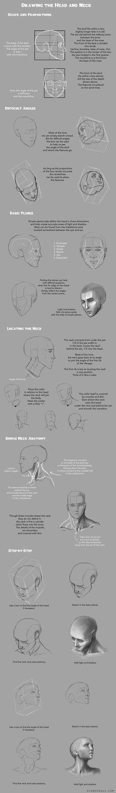 Proportions of the head and feature placement, basic planes, plus neck anatomy and placement.