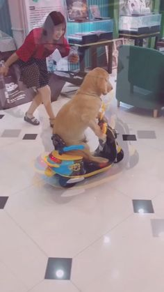 He just passed the driving test🤣🤣 VISIT: Abandoned Dog Has Soccer-Ball Sized Tumor Removed Funny Animal Memes, Funny Animal Videos, Cute Funny Animals, Dog Memes, Funny Animal Pictures, Cute Baby Animals, Funny Dogs, Animals And Pets, Cute Puppies