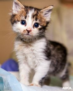We're helping even more at-risk kittens in LA, thanks to the help of a passionate community of animal lovers! http://www.aspca.org/blog/los-angeles-families-team-aspca-help-animals-their-communities