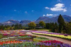 Flower Park of Kuju, Oita, Japan 大分 久住 くじゅう花公園 Oita, Kyushu, Japan, Mountains, Videos, Amazing, Nature, Travel, Naturaleza