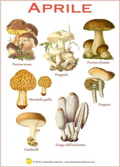 Most people who go in for mushroom growing just go out and buy both the spores (or spawn) and the growth medium. But if you are thinking of growing mushrooms commercially Poisonous Mushrooms, Garden Mushrooms, Edible Mushrooms, Growing Mushrooms, Stuffed Mushrooms, Mushroom Grow Kit, Mushroom Art, Mushroom Fungi, Mushroom Species