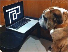 Este perro que actúa muy indiferente a este intento por asustarlo.   30 cosas que son mucho más importantes que estudiar para los exámenes finales
