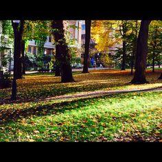 Beautiful fall in portland.