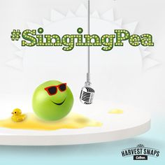 This little pea knows the heat is a bummer, so he is here to share his sweet songs of the summer! Turn it up! http://bit.ly/1NfIC1C