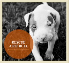 Rescue a pit bull.